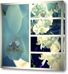 Картина Коллаж. Белая орхидея