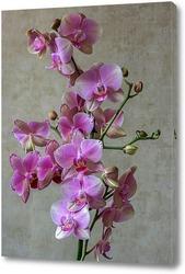 Картина Розовая орхидея