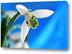 Картина Подснежник – первый цветок весны