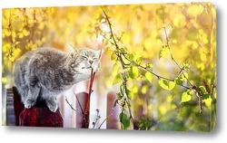 кошка весной