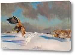 Зимняя охота орлов на зайца
