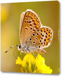 Картина Бабочка на жёлтом цветке