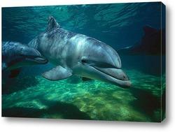 dolphin017