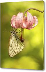 Картина Бабочка на цветке лилии