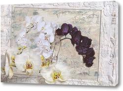 Картина Белые и черные орхидеи