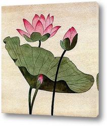 Цветок лотоса.
