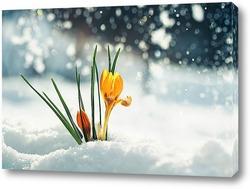 Картина нежный желтый цветок подснежника крокус пробивается из под снега в весеннем парке