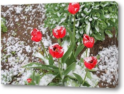 Картина тюльпаны под снегом