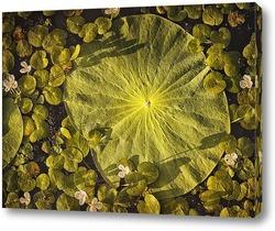 Картина Лист лотоса Комарова лежит на воде в пруду. Его окружают миниатюрные белые цветы