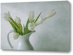тюльпан на белом фоне