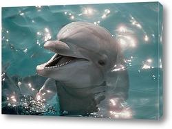 Картина Dolphin115