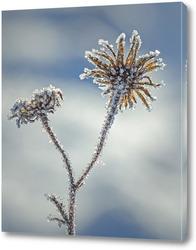 Картина Растение на снегу