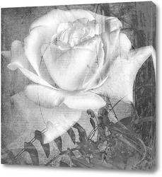 Картина Белая роза
