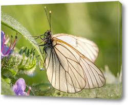 Картина Бабочка на стебле травы с каплей росы