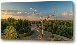 Пейзаж с одиноким сухим деревом