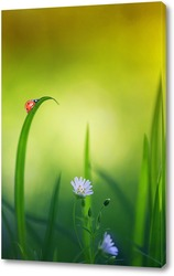 красивая маленькая божья коровка ползет по весеннему лугу с нежными белыми цветами и сочной зеленой травой