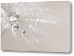 Картина Серебристые капли на одуванчике.