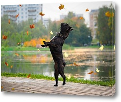 Танец под листопадом