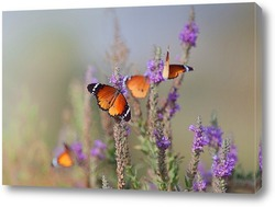 Бабочки - Цветочки