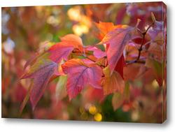 Картина Осенняя красота