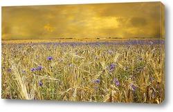 Пшеничное поле в желтый цвет
