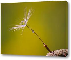 Картина Семя одуванчика с каплей росы
