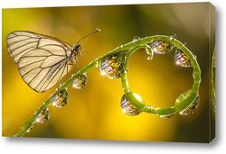 Картина Бабочка на стебле с капельками