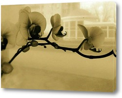 Картина Фаленопсис винтаж