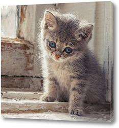 Картина Котёнок в окне