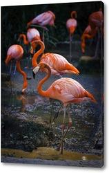 Постер Фламинго на водопое