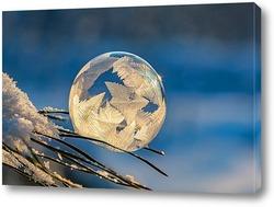 Замёрзший мыльный пузырь на ветке сосны