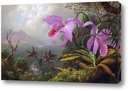 Две колибри на ветке рядом с двумя орхидеями