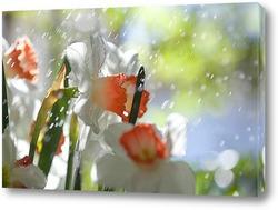 Картина нарциссы под каплями дождя