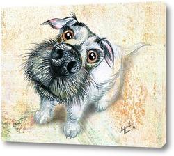 Любовь собаки