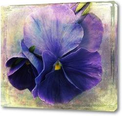 Картина Фиолетовая фиалка