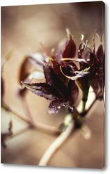 Картина Цветение листыв №4