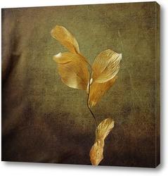 ветка (гербарий)