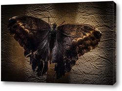Готическая бабочка