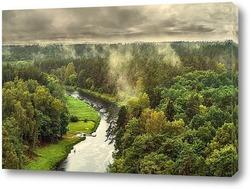 Лес после большой дождь