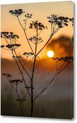 Паутина на стебле растения на фоне заходящего солнца