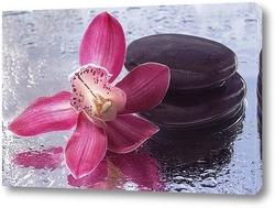 Картина Цветок орхидеи на мокром стекле