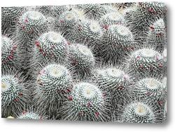 Картина кактуси