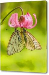 Две бабочки на цветке лилии