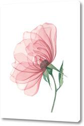 Картина Прозрачный цветок шиповника