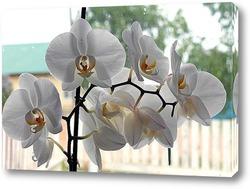 Картина Орхидея на окне