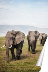 Постер Слоновья семья