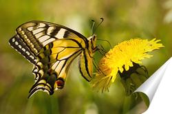 Постер Бабочка на цветке одуванчика