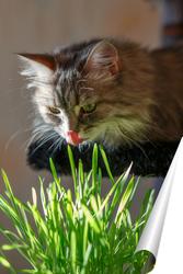 Постер Кошка