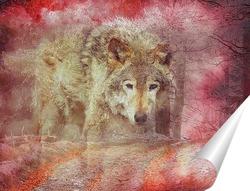 Постер Волчий взгляд