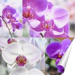 Постер Орхидеи коллаж